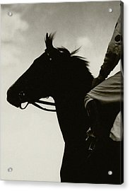 Race Horse Gallant Fox Acrylic Print by Edward Steichen