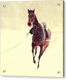 Race In The Snow Acrylic Print by Jenny Rainbow