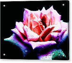 Rachel's Rose Acrylic Print