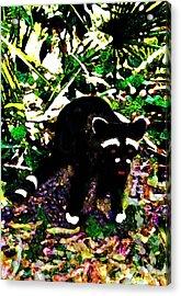 Racoon At Faver-dykes Park Acrylic Print by Dane Ann Smith Johnsen