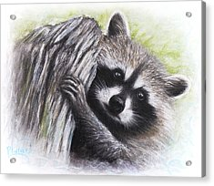 Raccoon  Acrylic Print by Patricia Lintner