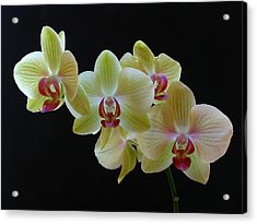 Radiant Orchid Acrylic Print by Juergen Roth