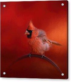 Radiant Red Bird Acrylic Print by Jai Johnson