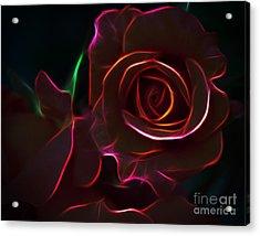Radiant Rose  Acrylic Print