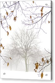 Acrylic Print featuring the photograph Ragged Glory by Russell Styles