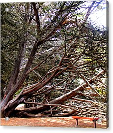 Ragged Point Tree Acrylic Print by Stephanie Moses