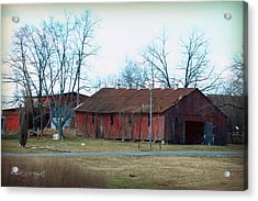 Ragged Red Shed I Acrylic Print by Paulette B Wright