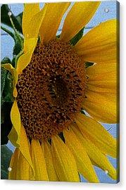 Rahab's Sunflower Acrylic Print