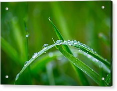 Acrylic Print featuring the photograph Rain Covered Grass by Gary Gillette