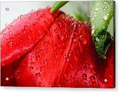 Rain Drops Acrylic Print by Ivelin Donchev