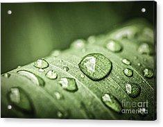 Rain Drops On Green Leaf Acrylic Print by Elena Elisseeva