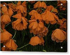 Rain Flowers Acrylic Print