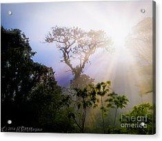 Rain Forest Sun Acrylic Print by Rdm-Margaux Dreamations