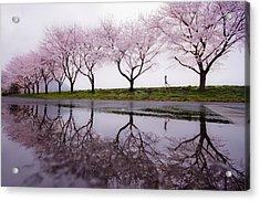 Rain Of Spring Acrylic Print by Kouji Tomihisa