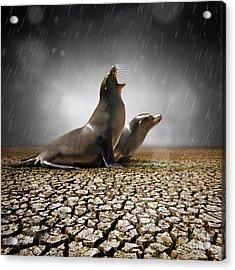 Rain Relief Acrylic Print by Carlos Caetano