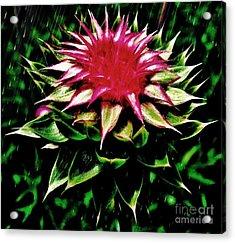 Rain Acrylic Print by Scott Allison