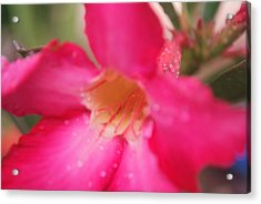 Acrylic Print featuring the photograph Rain Season by Miguel Winterpacht