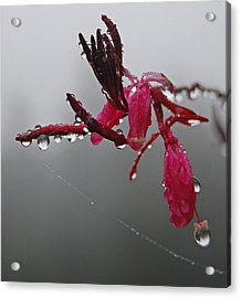 Acrylic Print featuring the photograph Rain Weaver by Jani Freimann