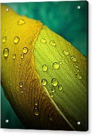 Rain Wrapped Acrylic Print by Chris Berry