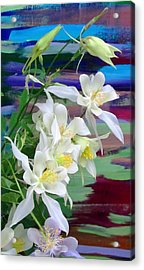 Rainbow Columbine Acrylic Print by Brenda Pressnall