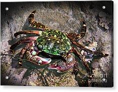 Rainbow Crab Acrylic Print by Mariola Bitner