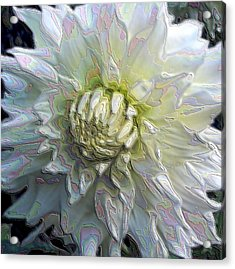 Rainbow Dahlia Acrylic Print