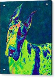 Rainbow Dane Acrylic Print by Jane Schnetlage
