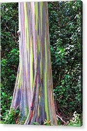 Rainbow Eucalyptus 3 Acrylic Print by Dawn Eshelman