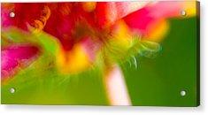 Acrylic Print featuring the photograph Rainbow Flower by Darryl Dalton