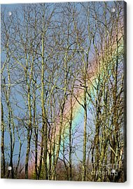 Acrylic Print featuring the photograph Rainbow Hiding Behind The Trees by Kristen Fox