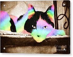 Rainbow Kitty Abstract Acrylic Print by Andee Design