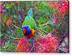 Rainbow Lorikeet I Acrylic Print by Cassandra Buckley