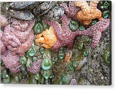 Rainbow Of Sea Creatures Acrylic Print by Karen Molenaar Terrell