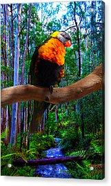 Rainbow Of The Forest Acrylic Print
