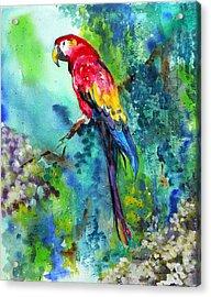 Rainbow On The Fly Acrylic Print