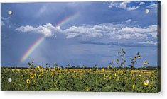 Rainbow Over Sunflowers Acrylic Print by Rob Graham