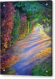 Rainbow Path Acrylic Print by William Schmid
