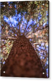 Acrylic Print featuring the photograph Rainbow Pine by Aaron Aldrich