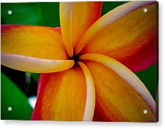 Acrylic Print featuring the photograph Rainbow Plumeria by TK Goforth