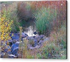 Rainbow Pond Acrylic Print