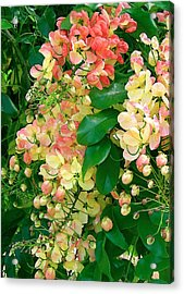 Rainbow Shower Tree Acrylic Print by James Temple