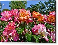 Rainbow Sorbet Roses Acrylic Print