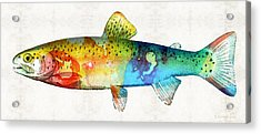 Rainbow Trout Art By Sharon Cummings Acrylic Print by Sharon Cummings