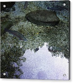 Rainbow Trout Acrylic Print by Les Cunliffe