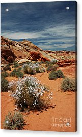 513p Rainbow Vista In The Valley Of Fire Acrylic Print