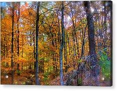 Rainbow Woods Acrylic Print