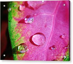 Raindrop On The Leaf Acrylic Print