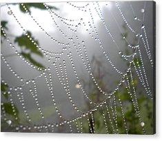 Raindrop Pearls In Fog Acrylic Print by Diannah Lynch