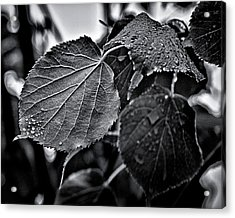 Raindrops After The Storm Acrylic Print by Brian Carson