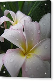Acrylic Print featuring the photograph Raindrops by Beth Vincent
